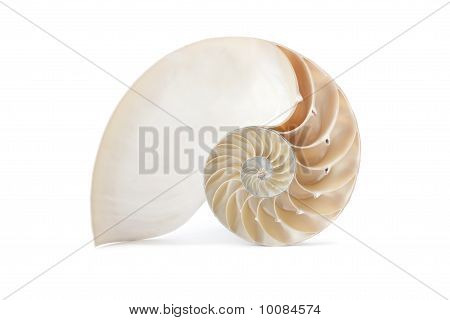 Nautilus Shell And Famous Geometric Pattern