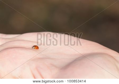 Ladybug on Palm of Hand
