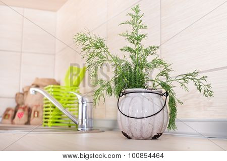 Dill In Pot On Kitchen Countertop