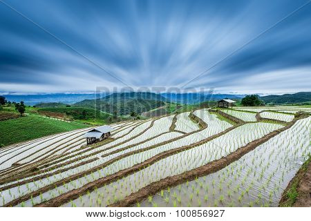 Terraced Paddy Field In Mae-jam Village , Chaingmai Province , Thailand With Radial Blur Effect.