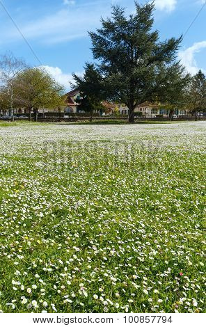 Saumur Town Spring View (france).