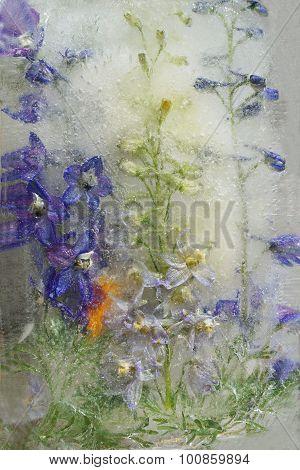 Background Of   Delphinium Flower Frozen In Ice