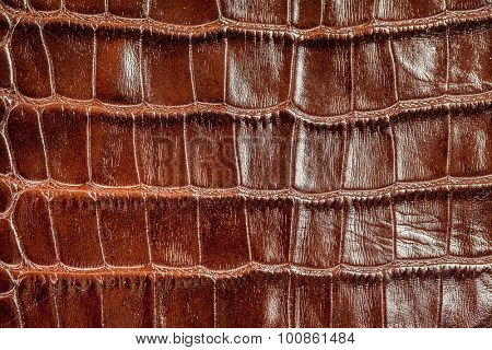 Background crocodile skin