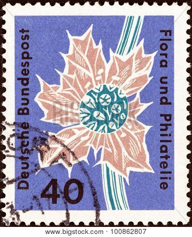 GERMANY - CIRCA 1963: A stamp printed in Germany shows Sea holly