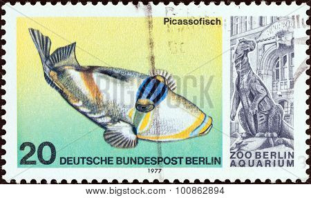 WEST BERLIN - CIRCA 1977: A stamp printed in Germany shows a Picasso Triggerfish