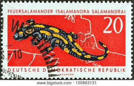 GERMAN DEMOCRATIC REPUBLIC - CIRCA 1963: A stamp printed in Germany shows Salamander