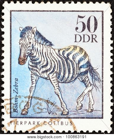 GERMAN DEMOCRATIC REPUBLIC - CIRCA 1975: A stamp printed in Germany shows a Common zebra