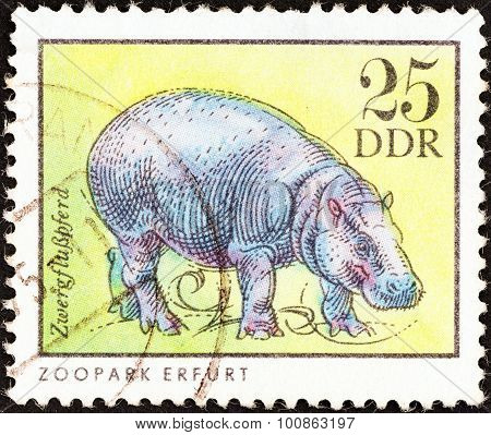 GERMAN DEMOCRATIC REPUBLIC - CIRCA 1975: A stamp printed in Germany shows a Pygmy hippopotamus