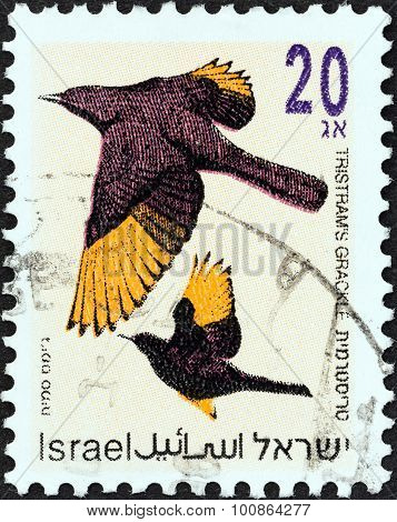 ISRAEL - CIRCA 1992: A stamp printed in Israel shows Tristram's grackle