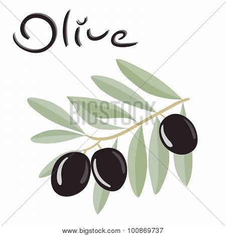 Black olives on a branch with leaves