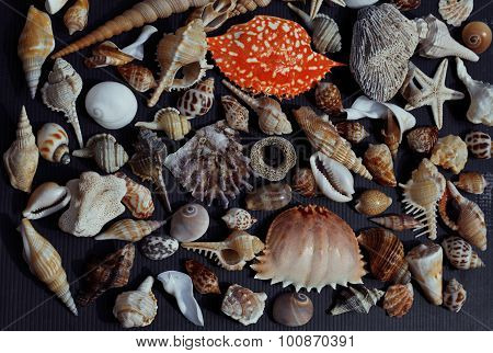 lot of seashells on setout together with crab