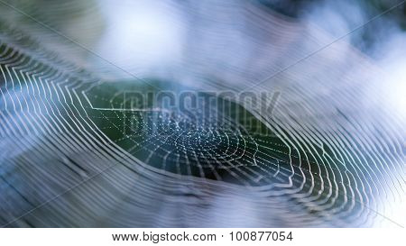 Spider Web Or Cobweb In Early Morning With Water Drops