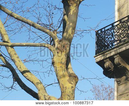 Balcony tree and beautiful blue sky