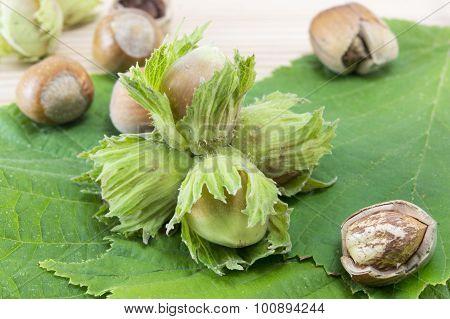 Raw Hazelnuts On A Green Hazelnut Leaf