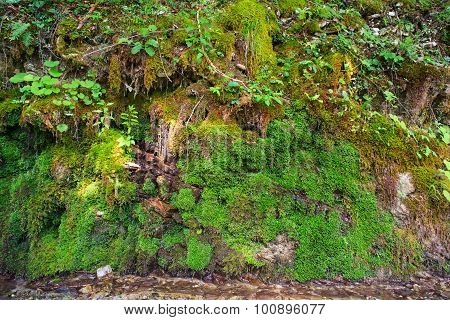 Moss In The Rock