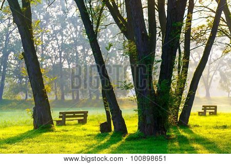 sunny summer park with trees and green grass and bench