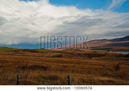 Islay field