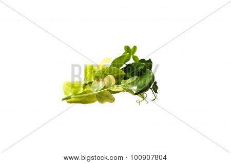 Sprig Of Young Peas Isolated On White Background