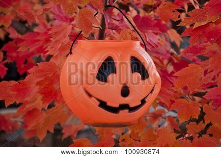 single pumpkin jack-o-lantern in autumn tree
