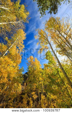 Beautiful Aspen
