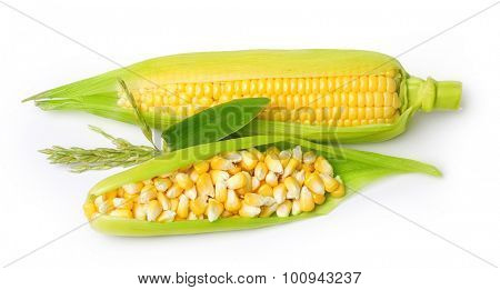 Ear of corn isolated on a white background. Fresh corncob.