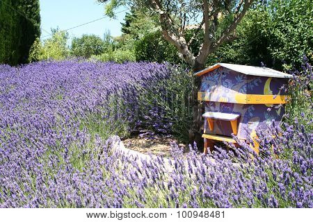 Lavender Field With Bee House