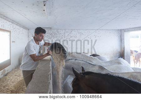 Boy Feeding Horses.