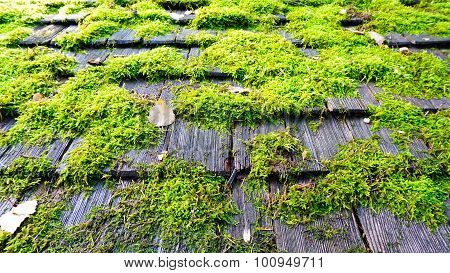 Moss On The Wood  Roof