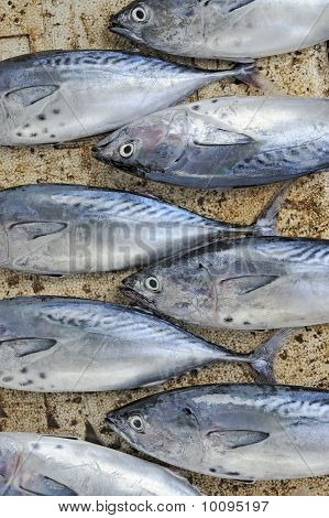 Thunfisch auf einem Markt angeordnet