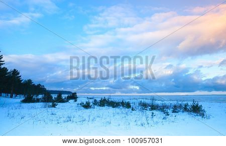 Winter Coastal Landscape With Small Trees