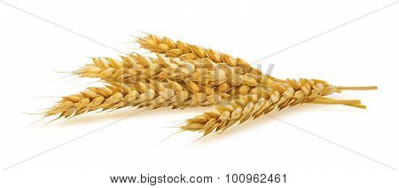 Horizontal Wheat Ears Isolated On White Background