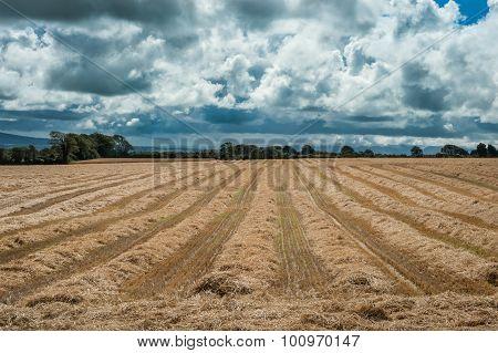 freshly cut wheat field stormy skies