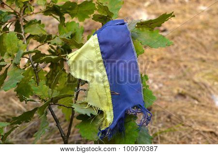 KIEV, UKRAINE - September 08, 2015:Ukrainian flag remains in the forest