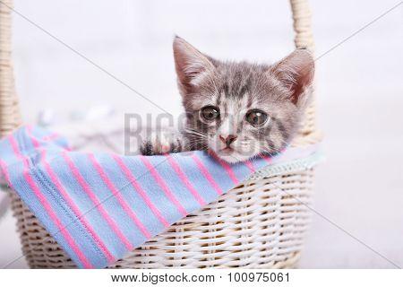 Cute gray kitten in basket in room