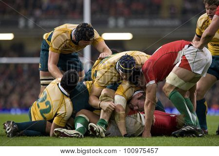 CARDIFF, WALES. 28 NOVEMBER 2009. Australian players scramble for the ball  during the Invesco Perpetual International Rugby Union match between Wales and Australia at the Millennium Stadium.