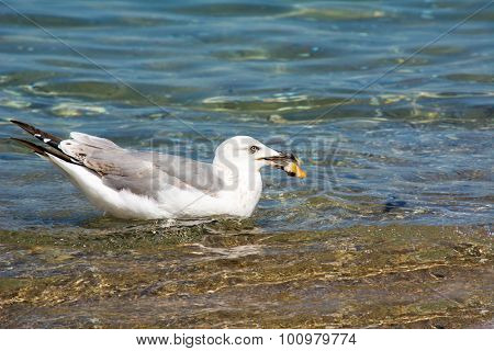 Seagull caught cookie with beak