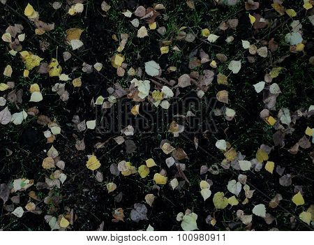 Fallen leaves pattern