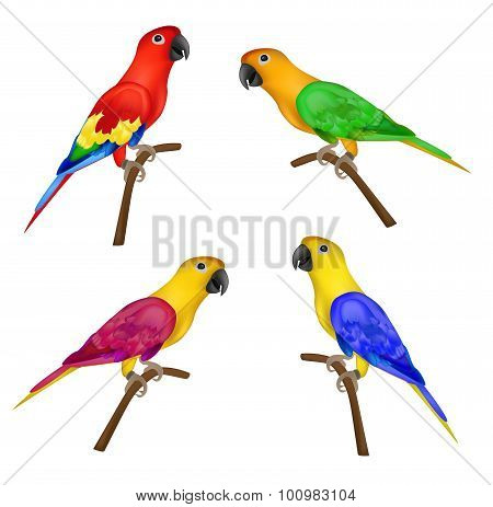 Set of beautiful colorful parrots isolated on white background- vector illustration.