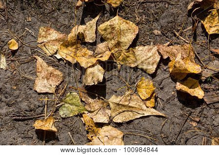 dry leafage on soil - abstract natural background