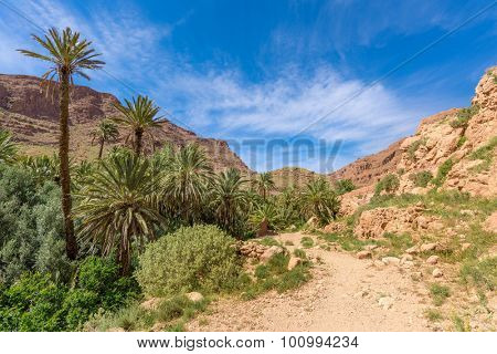 Africa, Morocco - Tinghir valley oasis - palm trees field