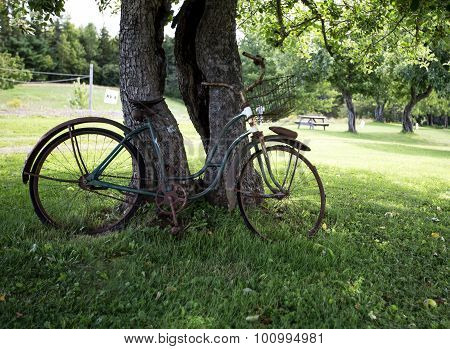 bicycle against a tree