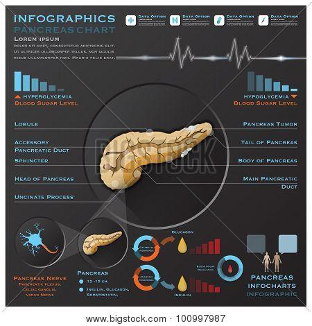 Pancreas Anatomy System Medical Infographic Infochart