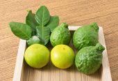 Постер, плакат: Fresh Kaffir Lime With Lemon Lime On Tray