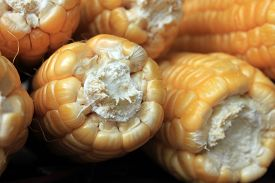picture of corn cob close-up  - ripe corn on brown background close up - JPG