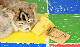 picture of mouse trap  - Cat sleeping next to a mouse trap baited with a wedge of cheese on a colourful floor background - JPG