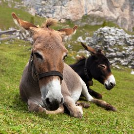 picture of wild donkey  - Group of Donkey  - JPG
