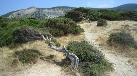 picture of juniper-tree  - Green juniper grove and crooked pine tree mountain landscape - JPG
