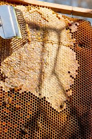 picture of honeycomb  - Close up view of the working bees on the honeycomb with sweet honey - JPG