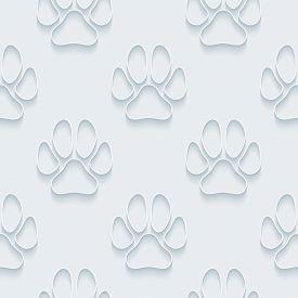 pic of dog tracks  - Dog paws - JPG