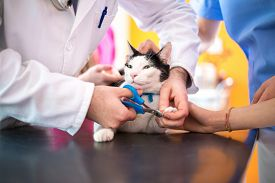 foto of claw  - Veterinarian performs professional cutting claws in vet clinic - JPG